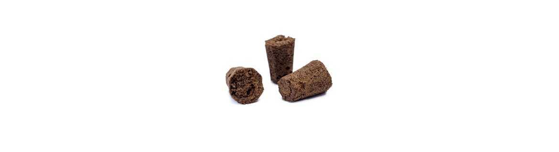 Cubes de boutures et germinations